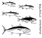fish vector set   commercial... | Shutterstock .eps vector #171367958