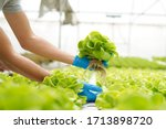 Small photo of Farmer harvest farm products and fresh vegetables in greenhouse or organic farm for supply chain and delivery to customer hydroponic farm and agriculture for food supply