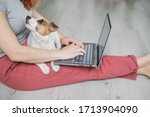 Puppy Jack Russell Terrier Sits ...