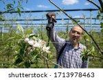 Man Agronomist Treating Apple...