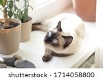 closeup portrait of beautiful... | Shutterstock . vector #1714058800