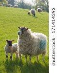 Healthy Animal Livestock...