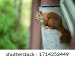 A Squirrel Sitting On A...