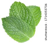 mint leaves isolated on white....   Shutterstock . vector #1714353736