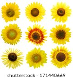 Set Of Sun Flowers Isolated On...
