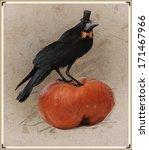 Dressed Corvus  Frugilegus
