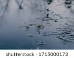 Swampy Destination. Dirty Water ...