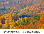Small photo of Breathtaking panoramic aerial view of the hills of colorful red, orange and yellow trees in a mixed coniferous forest in a morning haze. Fairy autumn landscape. Gauja national park, Sigulda, Latvia