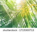 palm trees leave beautiful...   Shutterstock . vector #1715303713