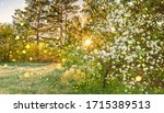 Beautiful Amazing Spring Forest ...