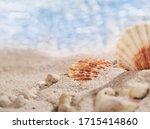 Two Small Seashells And Pebble...