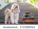Dog Standing Looking On Stairs...