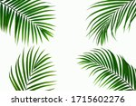 Leaves Of Coconut Isolated On...