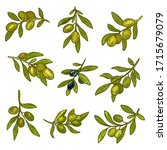 olives branches vector icons ... | Shutterstock .eps vector #1715679079