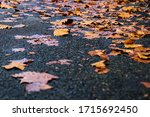 Road Full Of Maple Leaves After ...