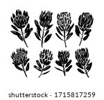protea flowers hand drawn... | Shutterstock .eps vector #1715817259
