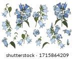 bluebells flowers  set of... | Shutterstock .eps vector #1715864209
