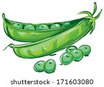 sketch of peas in a pod hand... | Shutterstock .eps vector #171603080
