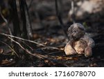 Lonely Teddy Bear In The  Burnt ...