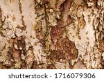 Natural Wooden Texture...