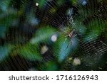 Pattern Of Spider Web And Black ...