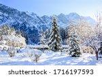 Winter Mountain Fir Trees  Sno...