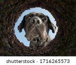 dog peeking into a dirt hole in ...   Shutterstock . vector #1716265573