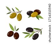 set of olives. olive branches.... | Shutterstock .eps vector #1716310540