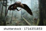 Archaeopteryx  Bird Like...