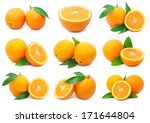 collection of fresh orange... | Shutterstock . vector #171644804