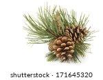 pine branch with pine cones | Shutterstock . vector #171645320