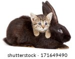 Stock photo friendship animals and pets kitten and rabbit in studio isolated on white background 171649490