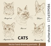 Hand Drawing Set Of A Purebred...