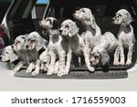 Many Dogs Are Sitting In The...