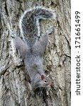 Squirrel On Bark