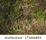Forest Floor Covered With...