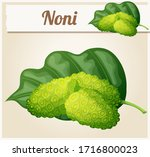 noni fruit illustration.... | Shutterstock . vector #1716800023