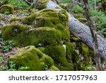 Old Fallen Wood Trunk Log At...