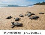 Cute Newborn Sea Turtle  ...