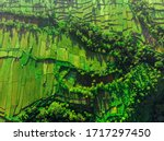 Aerial Top View Of Paddy Rice...