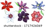 Clematis Watercolor Flowers...