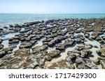 protected marine nature reserve living marine stromatolites