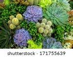Cactus Desert Plant.