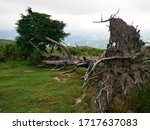 Uprooted Tree At The Top Of...