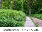 Path Through Ruislip Woods ...