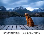 Dog On A Wooden Bridge By The...