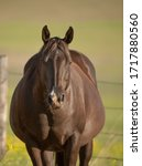 Pregnant Mare Mother Horse...