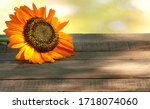Fall Sunflower On A Rustic Woo...