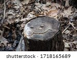 Close Up Of A Tree Stump With...