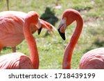 pink flamingos in the bio park Fuengirola Spain